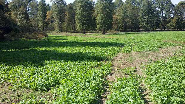 Southern Ohio Outfitters Food Plot Services